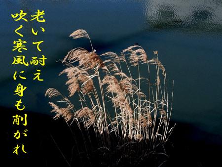 DSCN0075.jpg