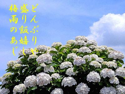 DSCN0713.jpg