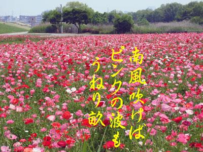 DSCN0722.jpg