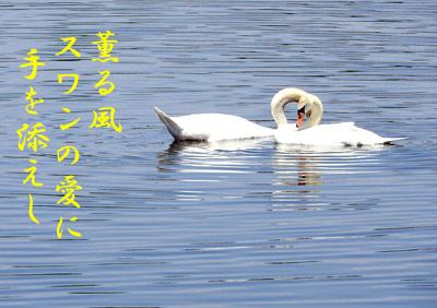 DSCN7720a.jpg