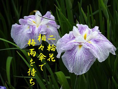 DSCN8416.jpg
