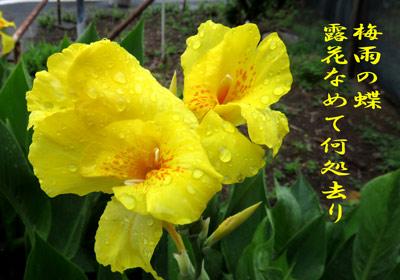 IMG_0063a.jpg
