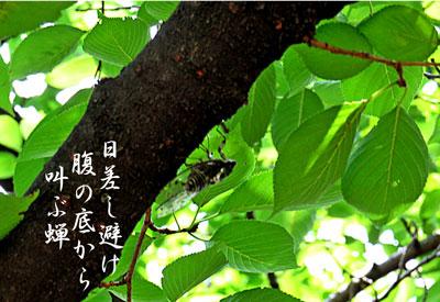 IMG_0110a.jpg