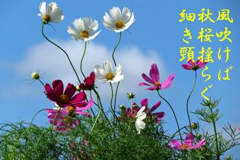 IMG_0206.jpg