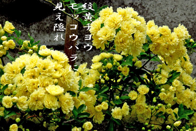 IMG_0224a.jpg