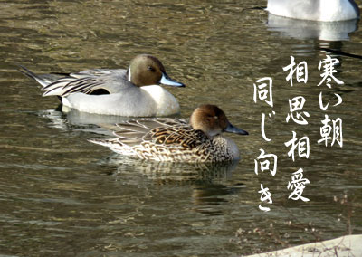 IMG_1119.jpg