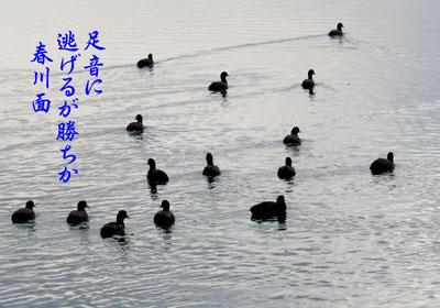 IMG_1764a.jpg