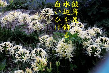 IMG_2496.jpg