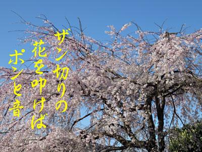 IMG_6214.jpg