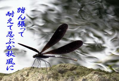 IMG_8303.jpg