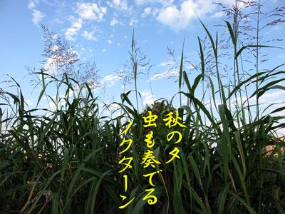 IMG_9295a.jpg