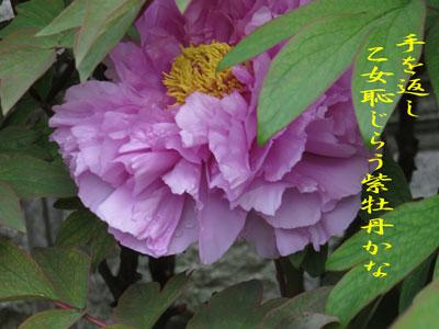 IMG_2602.jpg