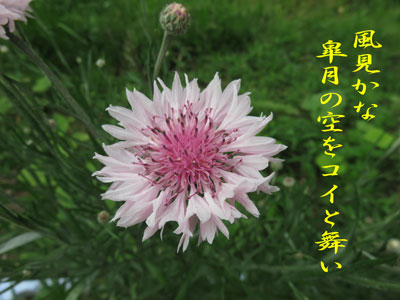 IMG_2639.jpg