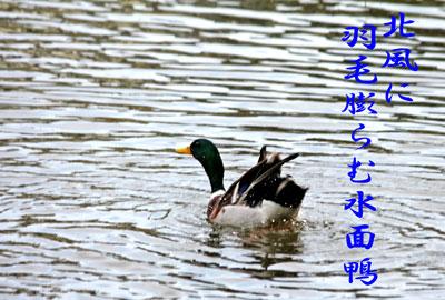 IMG_3751a.jpg