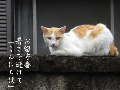 IMG_7066.jpg